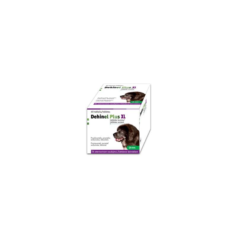 Fiziniai pratimai nuo artrito kenčiantiems šunims | Vetvila