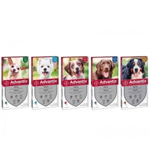 Advantix lašai šunims nuo erkių, blusų ir uodų (1 vnt.)