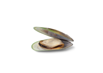 ingredient-green-lipped-clam.png